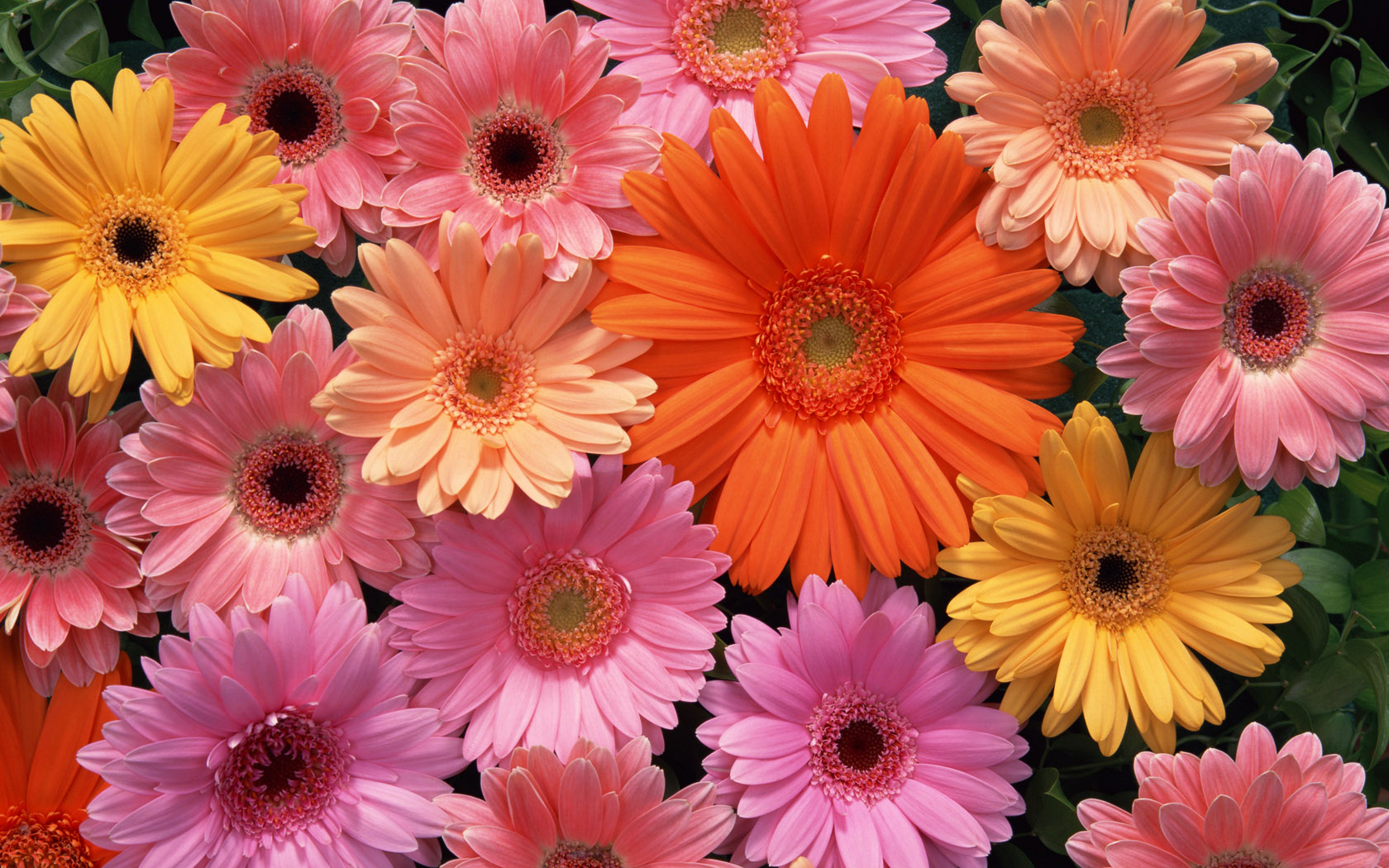 flowers for plastic surgery