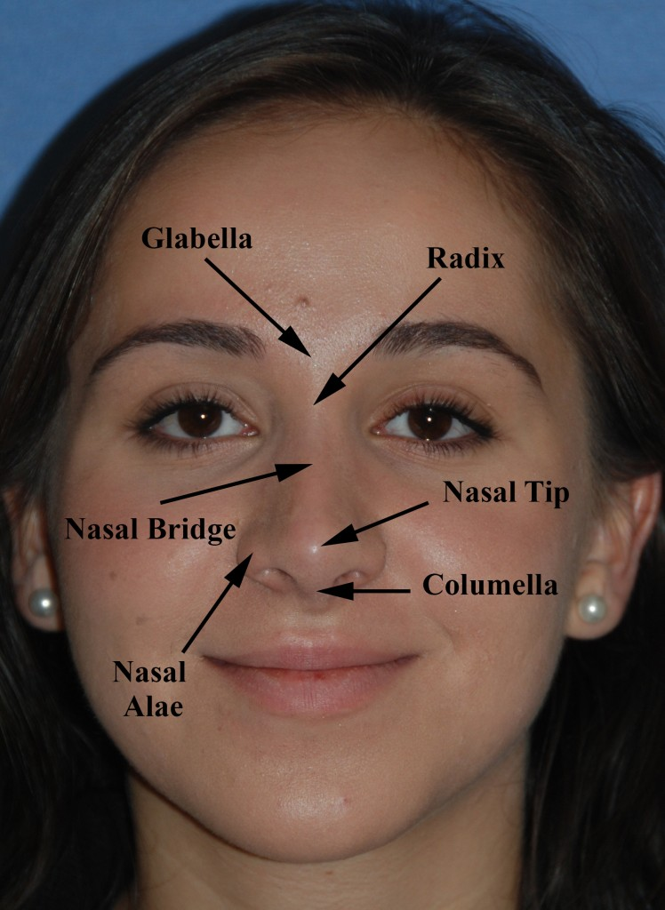 Rhinoplasty Anatomy 1